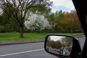 Flowering tree amidst traffic